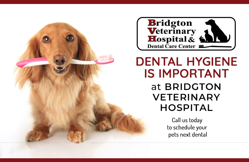 Veterinarian in Bridgton, ME